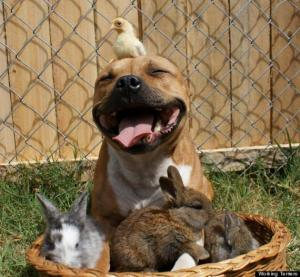 o-PICTURE-OF-PIT-BULL-WITH-BIRD-570